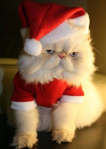 cat in Santa costume looking sour